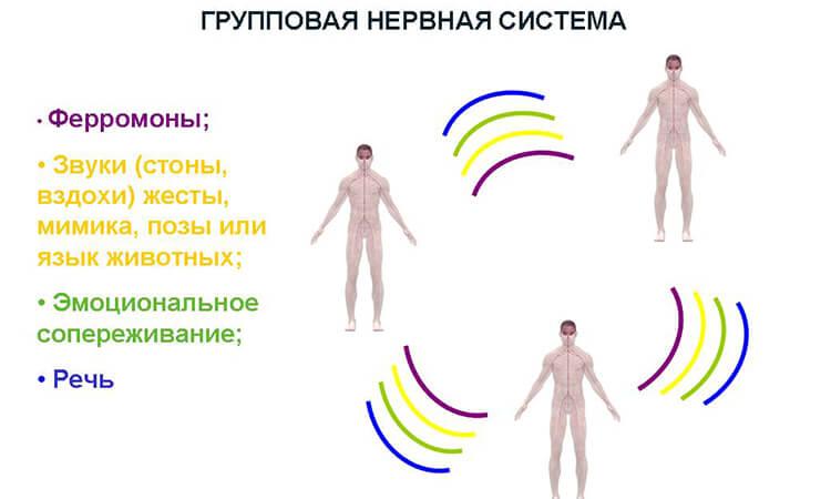 Групповая нервная система и групповое психическое. Часть 2